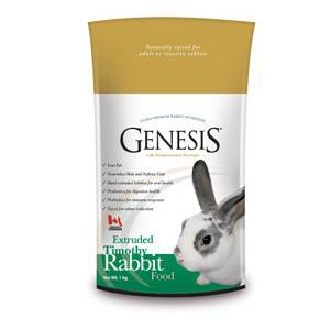 Genesis Rabbit Timothy