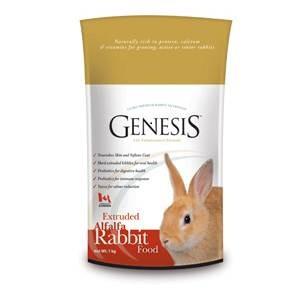 Genesis Rabbit Alfa Alfa